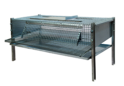 Cagepourcaillespondeuses /5036