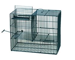 Falle für mehrere Vögel /5034