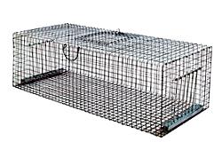 Falle für Tauben und Staren /5005